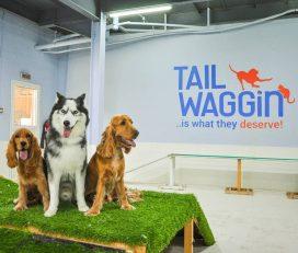 Tail-Waggin Pet Spa