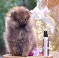 Mesho Pet Grooming Salon