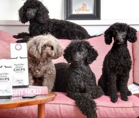 Adore Love Pamper Pets Boarding and Grooming