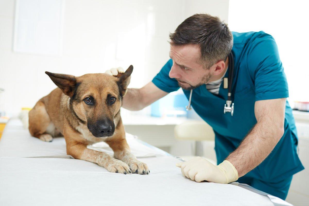 Canadian Veterinary Clinic Dubai